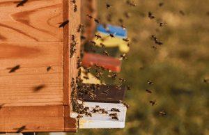 Fleißige Bienen sorgen für ordentlich Flugverkehr