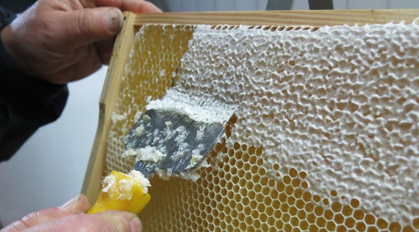 Honigernte beginnt mit dem Entdeckeln der Zellen
